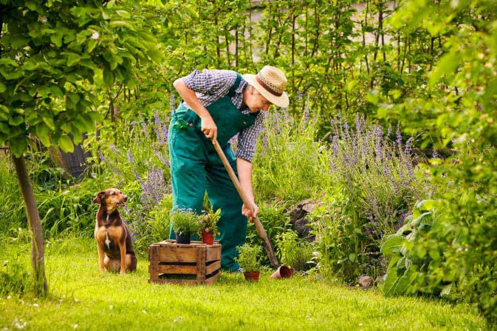 Accessible gardening for seniors and the disabled